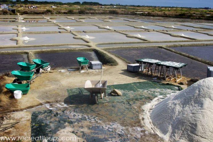 Découverte des marais salants avec Terre de Sel